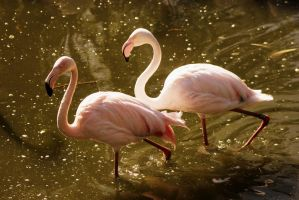 flamingos by imtl