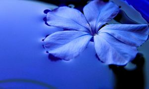 Blue all around by salman-khan
