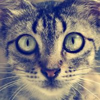 cats have symmetry too by magicofpygmalion