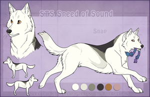 STS Dog - Snap by ShockTherapyStables