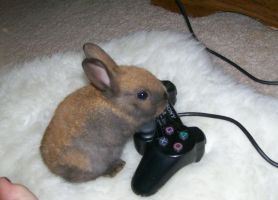 PS2 Bunny by 2DHumper38