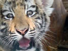 Excitable Cub by HeWhoWalksWithTigers