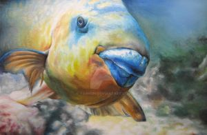 Parrot Fish by yarnuh
