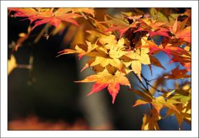 Autumn Leaves 6 by kucingitem