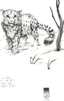 Snow Leopard by scarypet
