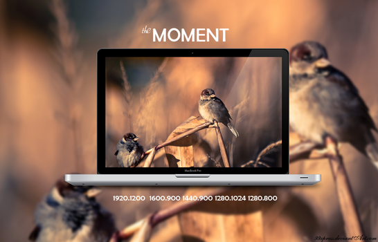 THE MOMENT by 99xpress