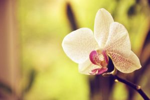 Orchid8 by NRichey