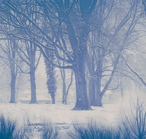Wintery Bliss Premade Background by AkirahVampyre