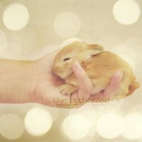 Hand full of cute by EliseEnchanted