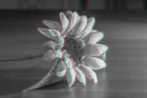 White Flower 3-D conversion by MVRamsey