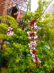 Plum Tree Spring 4 by LordNobleheart
