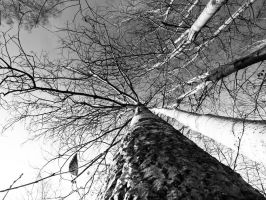 The trees by debagger