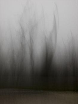 Foggy Winter 1 by FiLH