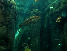 Fish 3 -- Sept 2009 by pricecw-stock
