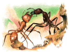 Fighting Ants - study by blossomdec4y
