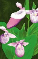 Lady Slippers by PucchiQ