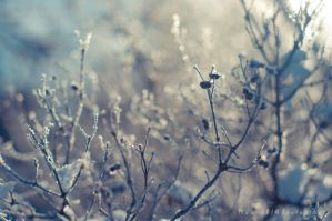 Frosty Bush by Rawrahl