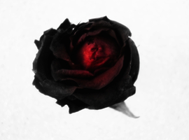 A Rose for the Dead by AnTheilo
