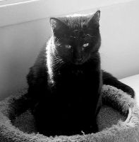 Kitty Looking Sad - BW by JocelyneR