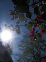 Sun Shinning Through the Bougainvillea by tundrawolf2223
