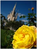 The Yellow Rose of Royalty by spectropluto