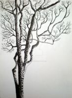 Tree sketch 2 by limegreenguitar