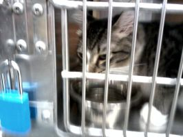 cat from brentwood tn petsmart  part 3 by michelous