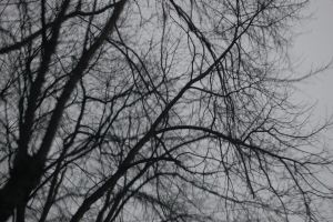 Grey Tree in col. by lifeforceinsoul