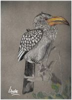 Yellow billed hornbill by YOB