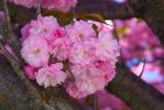 Pink Flowers 01 by Envy-Graphix