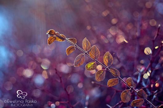 Winter Bokeh by efeline