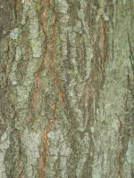 Bark Texture 2 by Orangen-Stock