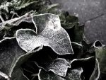 Frost on my gray morning by TheLadyAlmathea