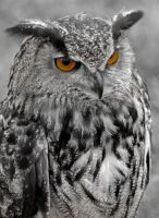 Eagle Owl by Hybrid-Hawk