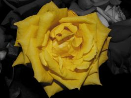 Yellow Flower by AllyCat1994