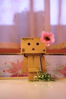 Danbo Girl by Hemaka86