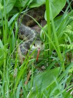 Curious Snake by LyraCat13