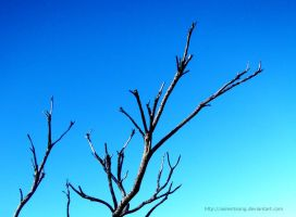 Bare branches by asilentsong