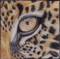 Leopard Eye by LikeAladybug