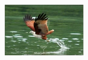 Eagle . . by sharjah3000