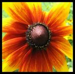 Black Hole Sun by picworth1000wrds