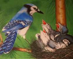 Bluejays In Spring by KW-Scott