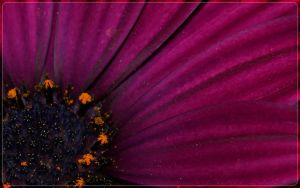 purple WP widescreen by webcruiser