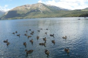 Ducks, lake and mountain by tazzmcspazz