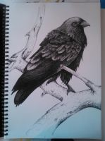 The Raven by im0rtality