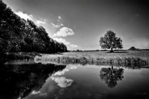 in reflection IV by theoden06