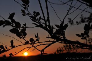 Sunset Through The Trees by Charly-Stary-Eyes