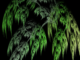 Fractal Willow by DanaAnderson