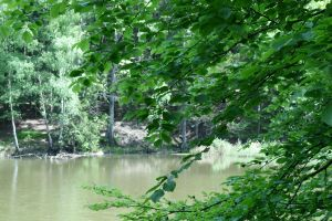 Lake in Forest by Jhadin