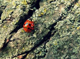 Red Ladybug by Michies-Photographyy